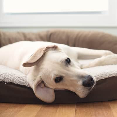 How to Clean a Dog Bed | Merry Maids